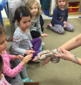 Erika Whitworth Of Habitat In Belmont Brought Along A Snake For Kids At Sunshine Nursery School To Check Out.